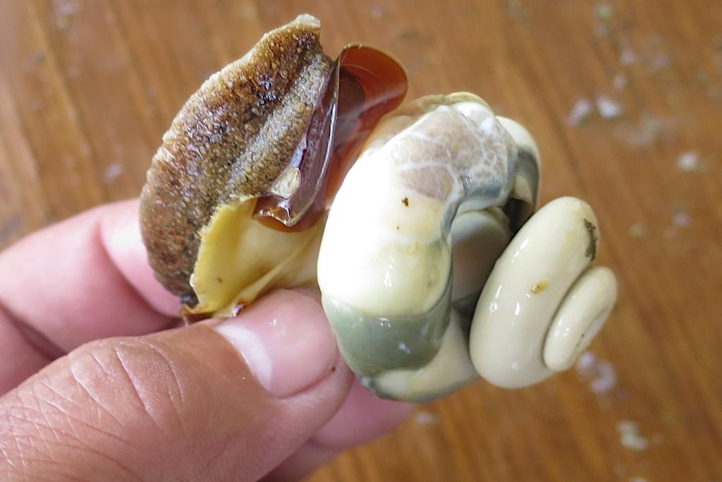 高瀬貝の処理(調理)方法【簡単な身の取り出し方法】